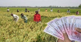 ৫ হাজার কোটি টাকা কৃষিঋণ দিচ্ছে সরকার