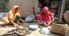 গোপালগঞ্জের শুঁটকি পল্লিতে নারী শ্রমিকদের মজুরি মাছের পেটা