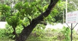টুঙ্গিপাড়ায় বঙ্গবন্ধুর স্মৃতিবিজড়িত স্থান সংরক্ষণের উদ্যোগ