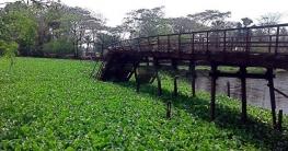 কলাপাড়ায় ব্রিজ ভেঙে দুর্ভোগে ১১ গ্রামের মানুষ