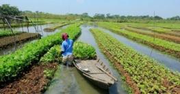 গোপালগঞ্জে ভাসমান সবজি চাষে কৃষকেরা লাভবান