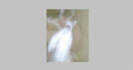 কোরআন হাদিসের আলোকে জিন জাতি সম্পর্কে কিছু তথ্য