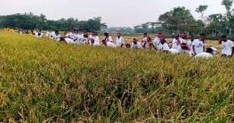 কোটালীপাড়ায় দরিদ্র কৃষকের ধান কেটে দিলেন কৃষক লীগ