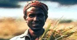 ধান কাটতে কোটালীপাড়া ইউএনওর ব্যতিক্রমী উদ্যোগ
