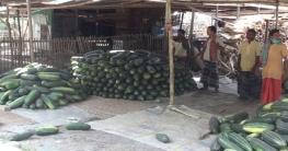 গোপালগঞ্জে বাঙ্গির বাম্পার ফলনে কৃষকের মুখে হাসি